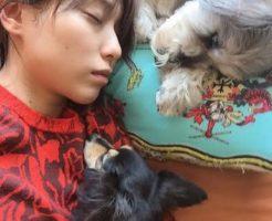 戸田恵梨香のマネージャーが心配してる!婚期を逃すのは愛犬が原因?
